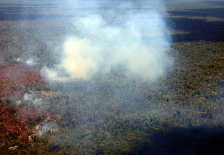 Recomiendan no dejar colillas de cigarros encendidas en la carretera o fogatas durante las visitas a terrenos forestales, para evitar incendios. (Redacción/SIPSE)