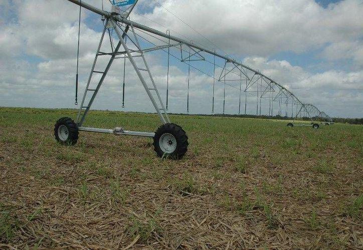 Los productores cañeros piden apoyo para funcionar el sistema de riego. (Edgardo Rodríguez/SIPSE)