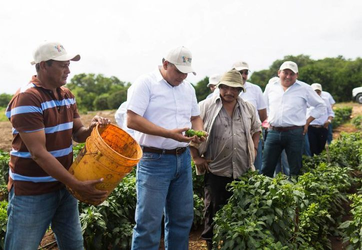 El Gobernador de Yucatán, Rolando Zapata, estuvo este sábado en Muna, donde anunció la construcción de más tramos carreteros sacacosechas. (Fotos cortesía del Gobierno estatal)