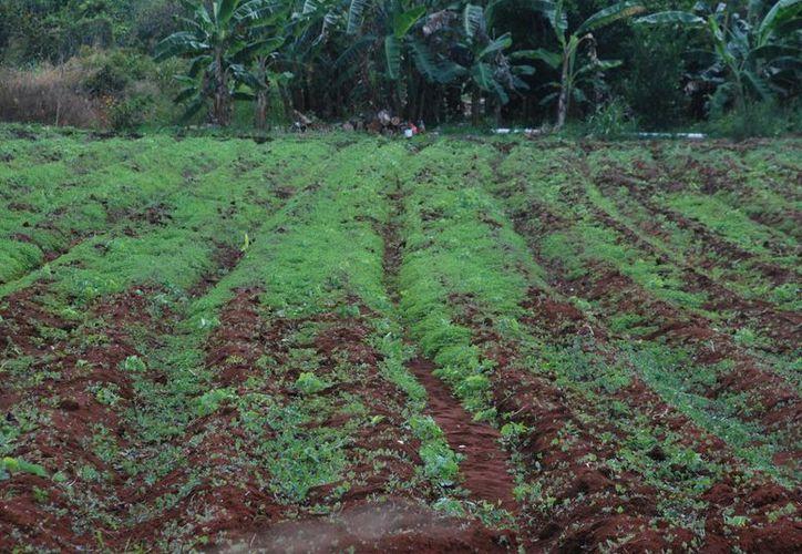 La comercialización que sigue siendo el talón de Aquiles del agro nacional. (Archivo/SIPSE)