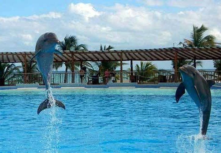 En Quintana Roo se encuentra la mayoría de los delfinarios. (Redacción/SIPSE)