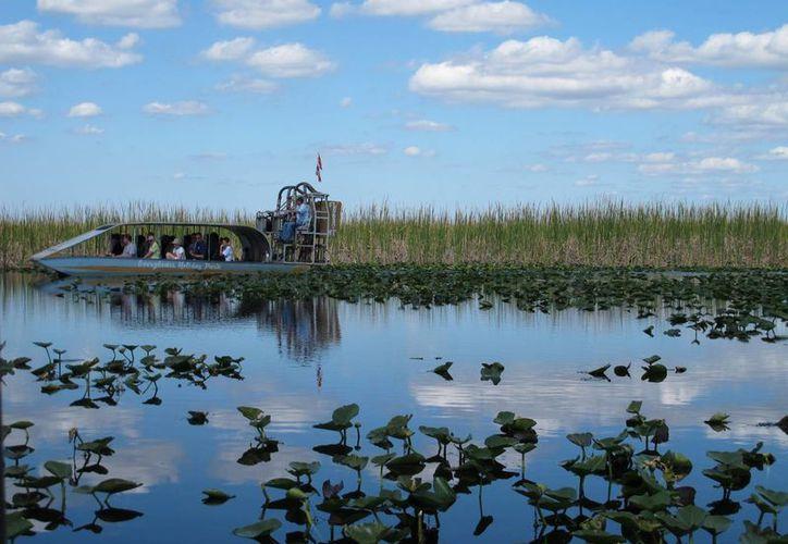El Parque Nacional de los Everglades fue declarado como tal desde 1947. (EFE)