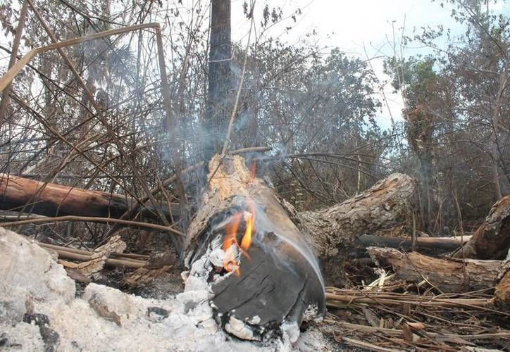 Las zonas vetadas se veían afectadas por incendios de manera recurrente. (Edgardo Rodríguez/SIPSE)