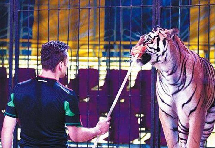 Los animales de circo están acostumbrados a interactuar con personas. (Octavio Hoyos/Milenio)