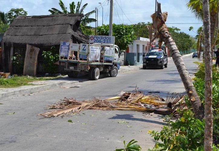 Ayer poco antes del mediodía un camión repartidor de gas sin frenos derribó dos palmeras y casi se mete a una casa.  (Redacción/SIPSE)