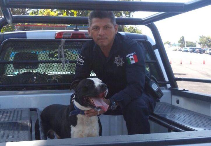 El perro fue asegurada por la Policía y trasladado al Centro de Atención Canina y Felina de Chetumal. (Foto: Redacción)