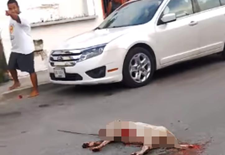 El caso de un perro que presuntamente falleció debido a que fue atravesado por un arpón en Playa del Carmen, sigue sin avances. (Redacción/SIPSE)