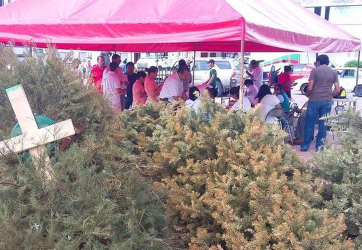 Este viernes inició la recolección de arbolitos de navidad como parte del programa 'Reciclatón'. (Daniel Pacheco/SIPSE)
