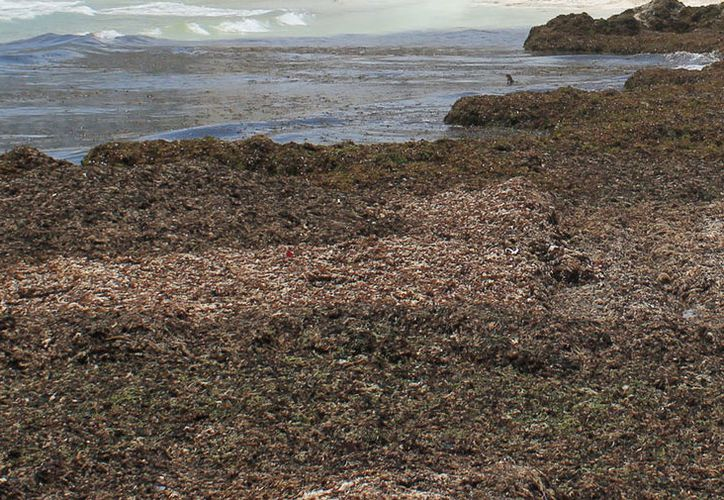 El fin de semana una de las playas más afectadas fue Chac Mol y Coral. (Jesús Tijerina/SIPSE)