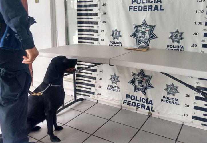 Imagen del paquete de hachís que la Policía Federal aseguró esta mañana en una oficina de mensajería en Mérida. (José Salazar/SIPSE)