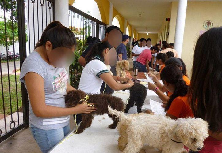 Se realizó la primera campaña de esterilización de perros y gatos en Izamal, Yucatán, con la que se evitó el nacimiento de más de dos mil mascotas. (Cortesía)