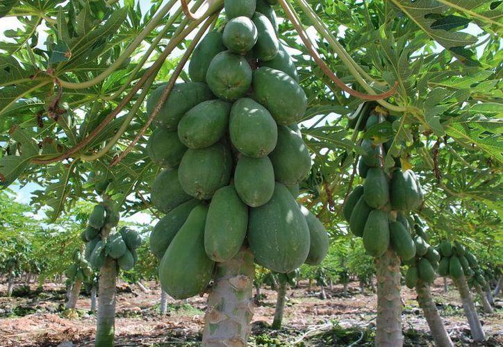 Supervisará  la Sedari el agro quintanarroense para afinar proyectos agropecuarios. (Cortesía/SIPSE)