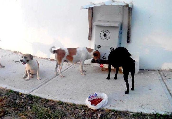 El 'ComeDog' ha tenido un gran éxito en Colombia, por lo que ahora será instalado en México para beneficio de miles de animales en situación de calle. Imagen de archiv. (facebook.com/pages/Proyecto-ComeDog-México)