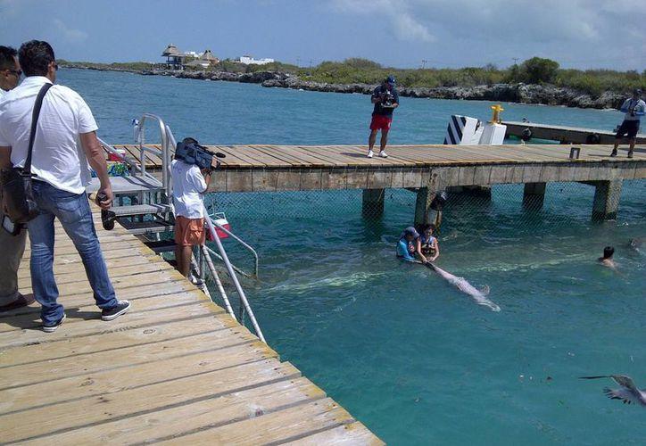 En la transmisión aparecerán imágenes del delfinario. (Lanrry Parra/SIPSE)