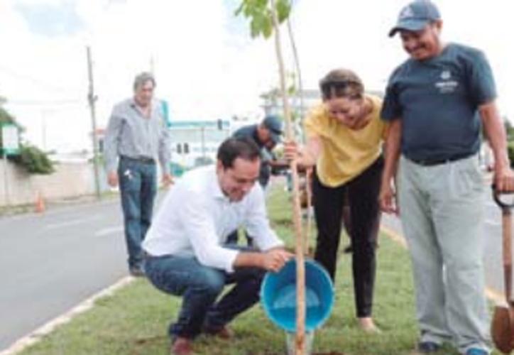 El alcalde Mauricio Vila Dosal encabezó en días pasados la reforestación de un tramo de la avenida Líbano. (Redacción/SIPSE).