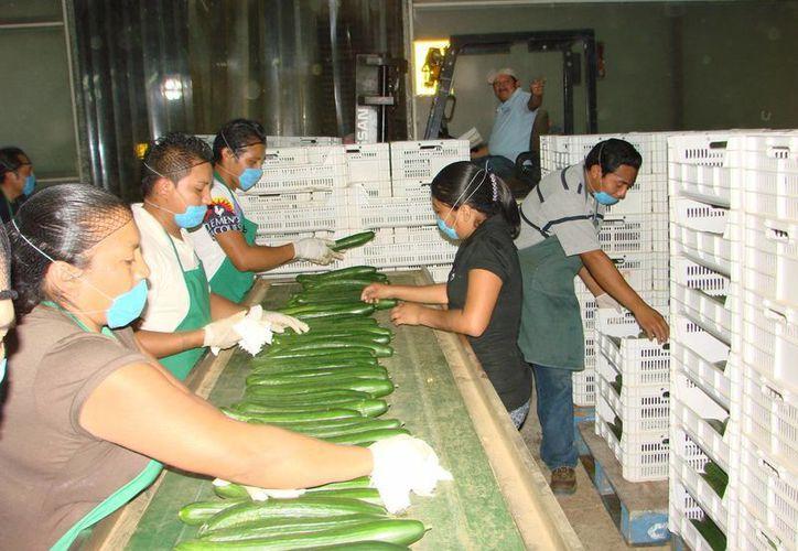 Un total de 71 jefes y jefas de familia que laboran en el lugar perderán su fuente de trabajo. (Manuel Salazar/SIPSE)