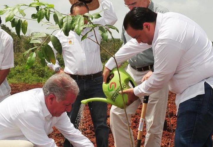 En Quintana Roo, el techo presupuestal asignado para el 2014 fue de 170 millones de pesos con lo que se han reforestado más de dos hectáreas. (Redacción/SIPSE)