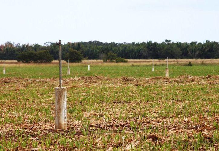 Alrededor de cinco mil hectáreas no pueden encender el sistema de riego porque han sido desmanteladas. (Edgardo Rodríguez/SIPSE)