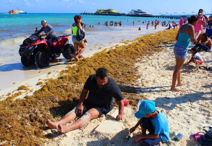 El sargazo no ha impedido que los visitantes de todas edades se aventuren a introducirse al mar. (Daniel Pacheco/SIPSE).