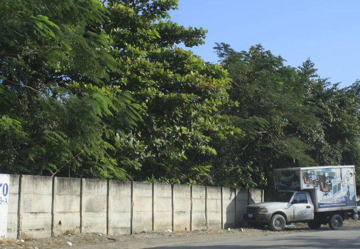 La empresa pretende establecer el edificio en un terreno sobre la avenida Insurgentes de Chetumal, a un costado de la SEyC. (Harold Alcocer/SIPSE)