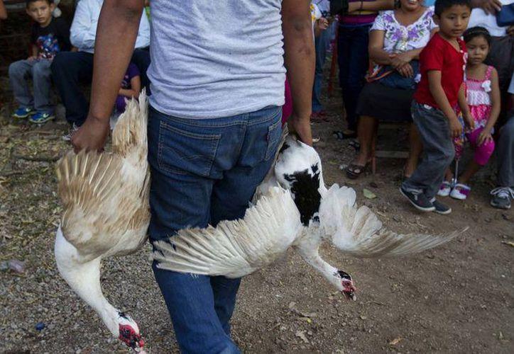El Kots Kaal Pato, un ritual que consistía en golpear animales hasta matarlos, era parte de una fiesta tradicional en Citilcum, Izamal, Yucatán. Una organización internacional recabó firmas para apoyar su transformación. (Archivo/VICE)
