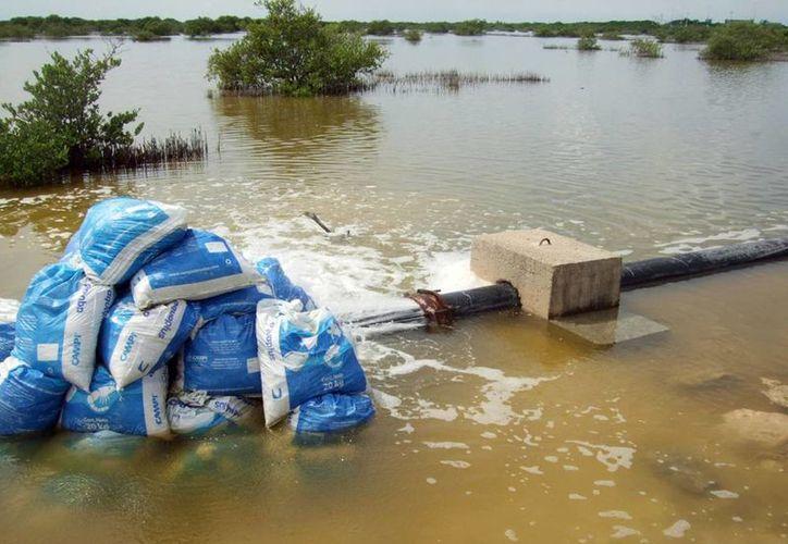 La fuga, en una de las principales tuberías a la entrada de Chicxulub Puerto, ha causado gran desperdicio de agua. (Milenio Novedades)