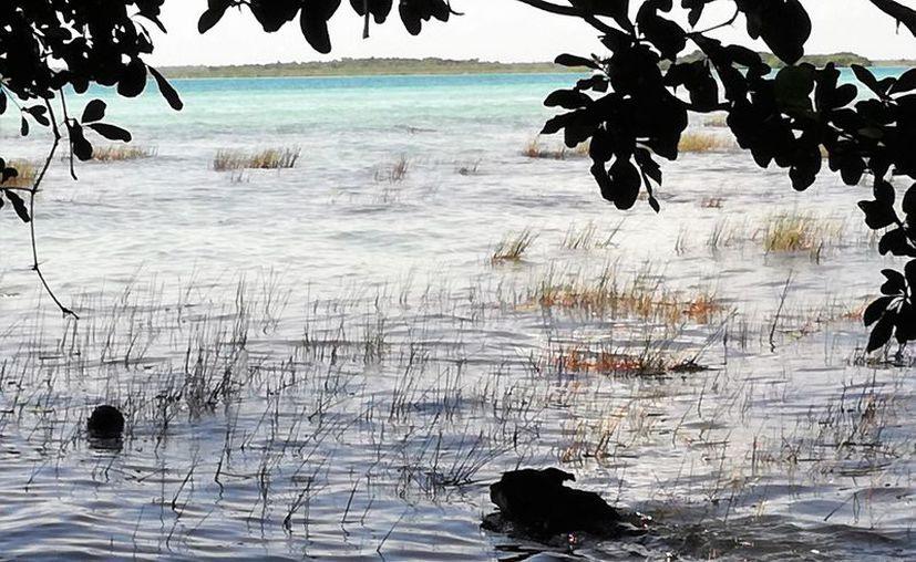 La laguna está perdiendo su tonalidad gracias a la contaminación y se debe evitar cualquier tipo de afectación a ella. (Foto: Javier Ortíz/SIPSE)