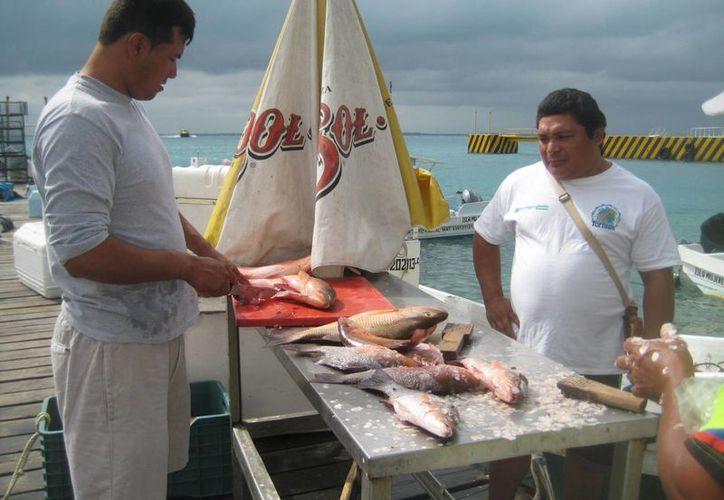 El Ayuntamiento prevé mantener el apoyo durante este año a 260 pescadores. (Lanrry Parra/SIPSE)