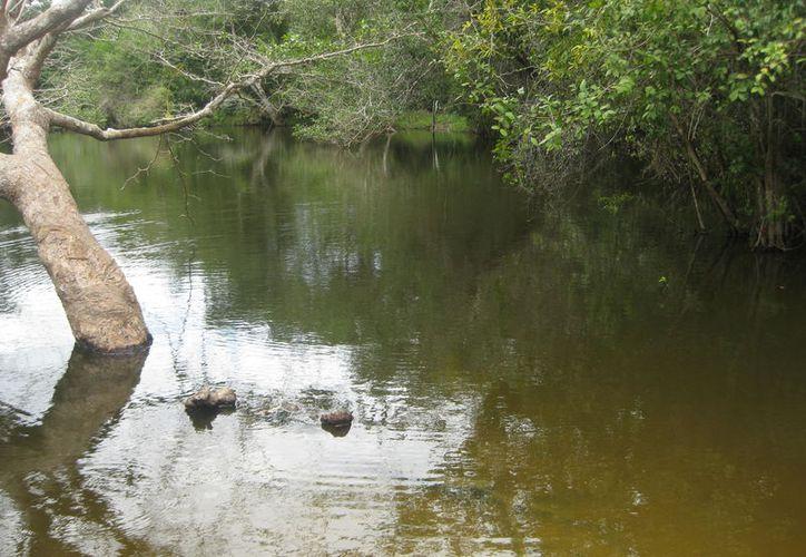 Habitantes de la comunidad Isidro Favela, en Bacalar, han presentado enfermedades cutáneas por consumir agua no potable.  (Javier Ortiz/SIPSE)
