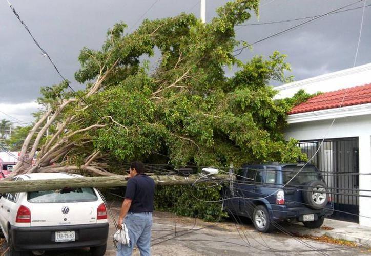 La caída de árboles 'son los únicos incidentes registrados, nada grave', dijo Protección Civil en Yucatán. (SIPSE)