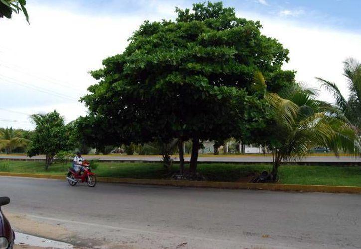 La Unidad de Desarrollo Sustentable de Mérida y especialistas realizarán un inventario de árboles de la ciudad. (Milenio Novedades)