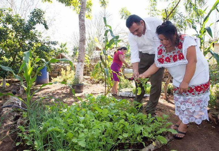 Familias palian su economía con la venta de parte de la producción. (Milenio Novedades)