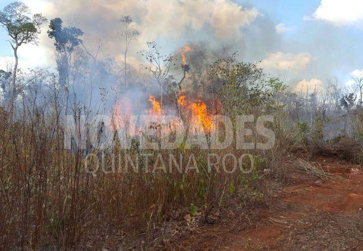 De enero a la fecha, se han presentado ocho incendios en Othón P. Blanco. (Foto: Juan Rodríguez/SIPSE)