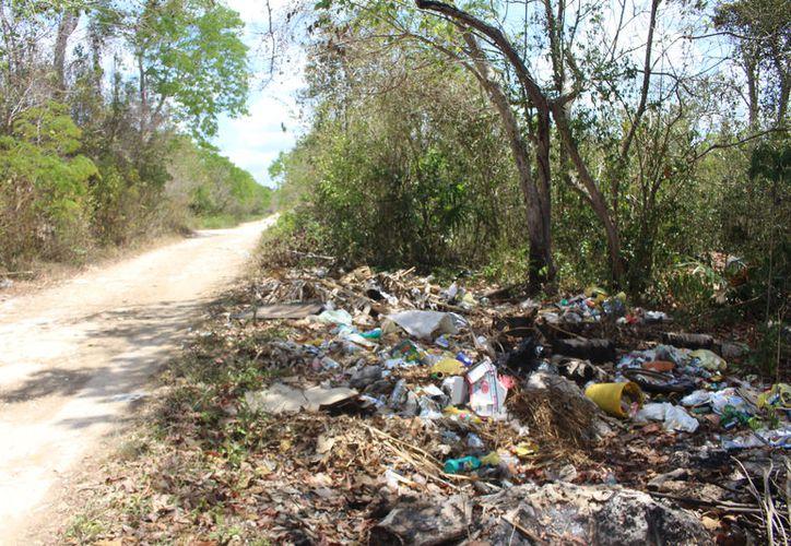 Vigía Chico conecta a la reserva de Sian Ka'an en Felipe Carrillo Puerto. (José Chi/SIPSE)