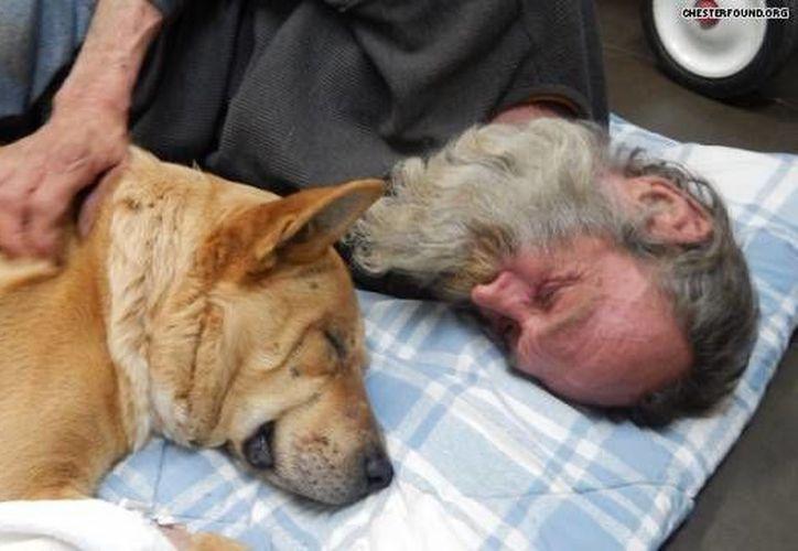 La Fundación Chester todavía busca una solución permanente de vivienda para Steve Anthony y River. (hlntv.com)