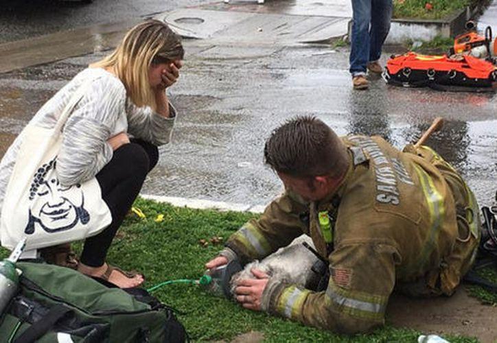 Los bomberos dieron al perro resucitación cardiopulmonar y  resucitación de boca a hocico. (Foto: Milenio)