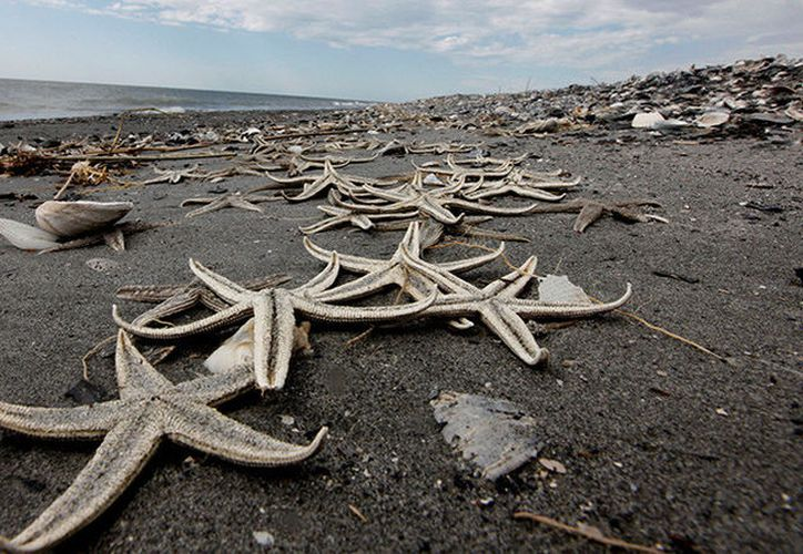 Tormenta invernal Emma dejó muerte en las playas de Reino Unido. (Foto: RT)