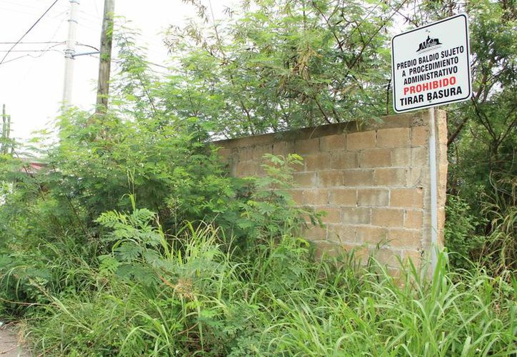 Los predios baldíos se han convertido en un problema muy fuerte en Mérida, en particular en este lluvioso 2013. (SIPSE)