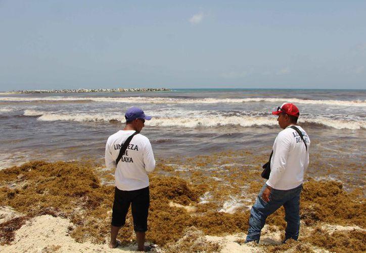 Contemplan que los empleos sean temporales cada año ante la llegada del alga. (Paola Chiomante/SIPSE)