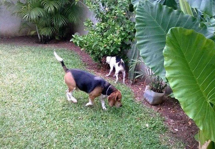 Los turistas tienen la confianza de dejar a sus mascotas en las instalaciones del hotel. (Israel Leal/SIPSE)