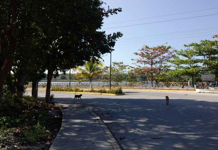 A partir del 18 de febrero iniciarán trabajos en el tramo más afectado entre Cobá y San Pedro. (Sara Cauich/SIPSE)