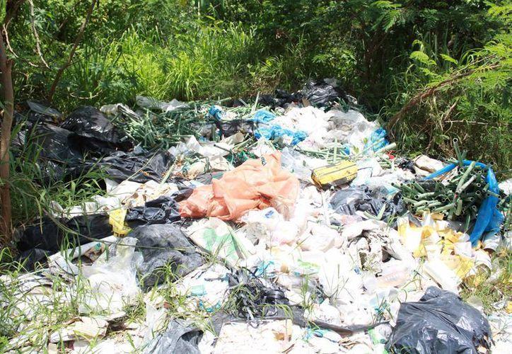 Los desechos se han convertido en un foco de infección. (Luis Soto/SIPSE)