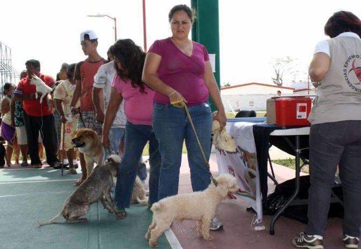 Las enfermedades contraídas por mascotas no son mortales, si se suministran los antibióticos adecuados. (Jorge Carrillo/SIPSE)