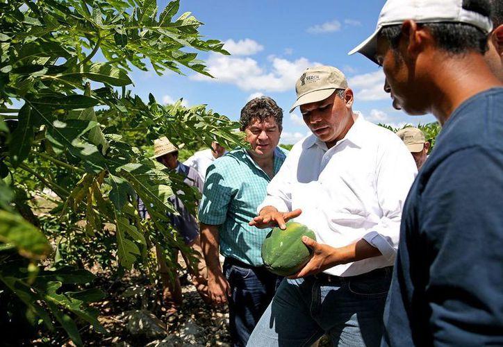 El gobernador Rolando Zapata Bello recorrió unidades productivas en Yobaín y Sinanché. (SIPSE)