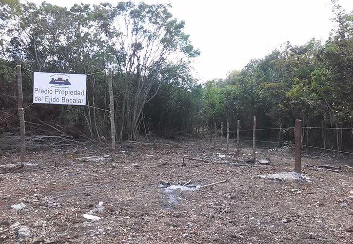 Desarrollos Manzo S.A de C.V., no pudo invadir nueve hectáreas de tierras en Bacalar. (Javier Ortíz/SIPSE)