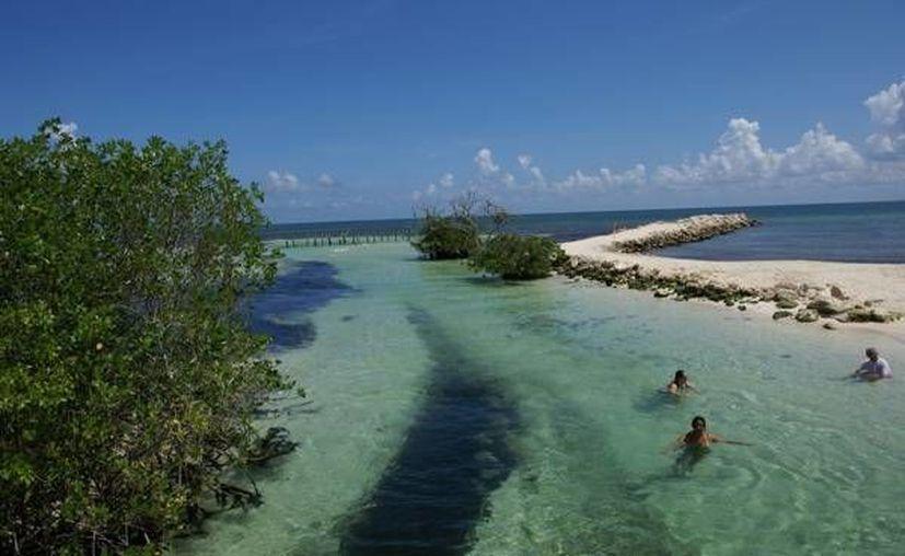 En el Estado se pueden contemplar paisajes de gran riqueza ambiental, como los bosques de mangle. (Contexto/Internet)