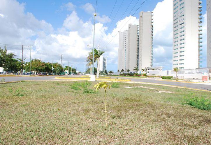 El sistema de riego iniciará en la glorieta Sayil con Bonampak y podría extenderse hasta la Nichupté. (Tomás Álvarez/SIPSE)