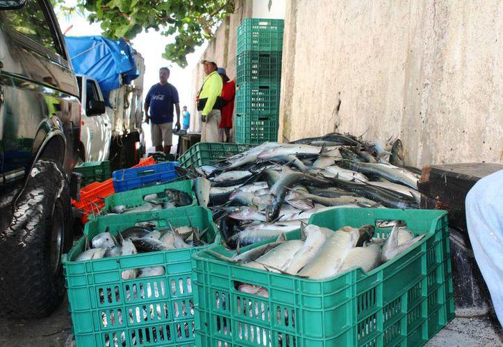 Trabajadores municipales se presentaron en la playa de la avenida CTM. (Octavio Martínez/ SIPSE)