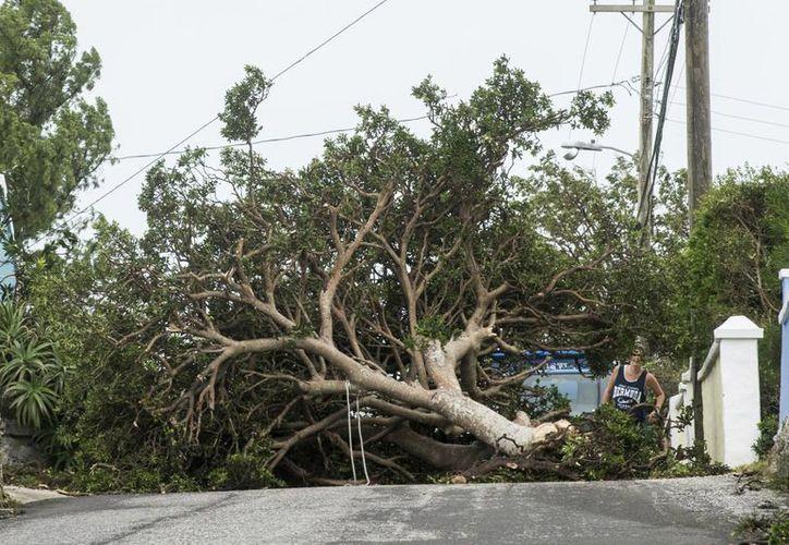 El huracán 'Nicole' arrancó muchos árboles y tejados, además de que causante de inundaciones en las viviendas en su paso por la isla el jueves.(Mark Tatem/AP)