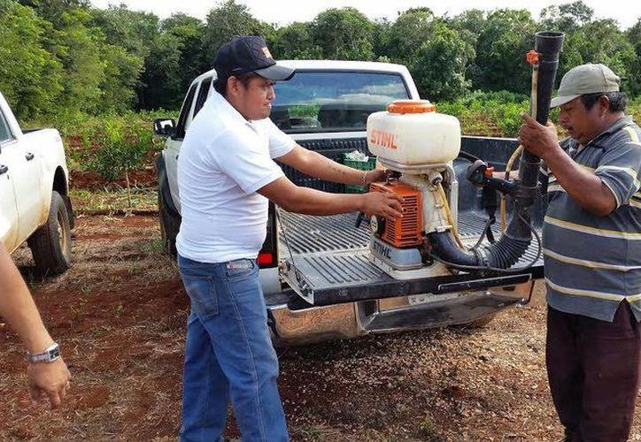 Se regaron químicos en 10 hectáreas de plantíos citrícolas de la zona norte del Estado. (Javier Ortiz/SIPSE)